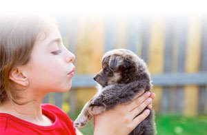 What is the best puppy formula?