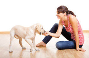 What are three keys for raising a healthy puppy?