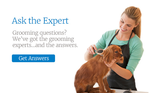 Ask the Expert. Grooming questions? We've got the grooming experts... and the answers.